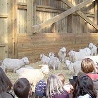 Bouton vers la visite de la ferme